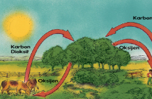karbondioksit_oksijen_dongusu