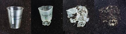Biyoplastiklerin biyobozunum örneği