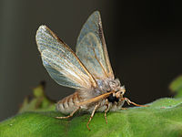 200px-Moth_September_2008-3