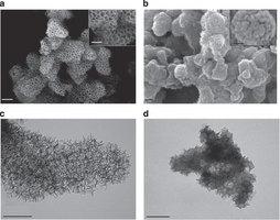 Saf silika desteği ve amin sorbentin yapısı.