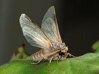 200px-Moth_September_2008-3