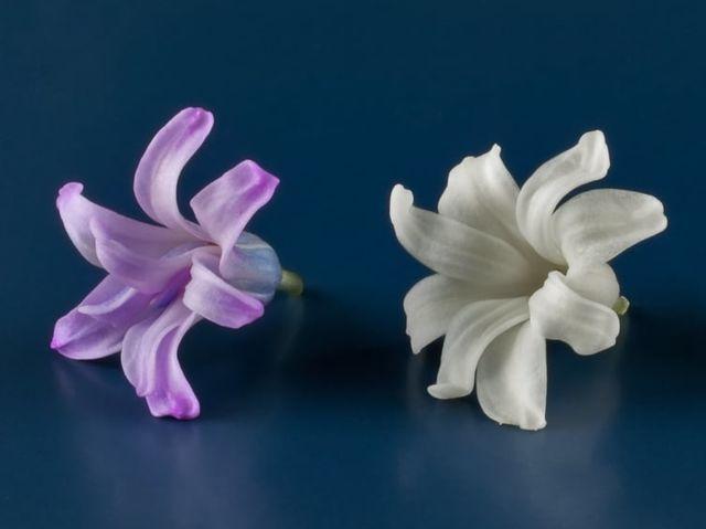 9. Çiçeklerin yaprakların rengini hangi gaz yok edebilir?